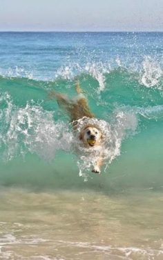 Make one special photo charms for your pets, 100% compatible with your Pandora bracelets.  Dog's body surfing  – Isabelle Morais