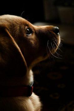 the beauty of the Dachshund, dog breed medium size  – ArchZine FR