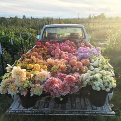 HERE IT IS! LOOK AT IT! IT'S PERFECT. | People On Instagram Are Obsessed With This Photo Of A Bunch Of Flowers In A Truck  – annamariesieve