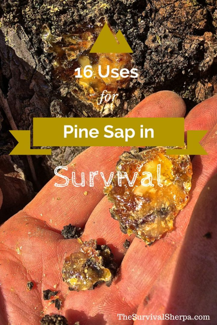16 Uses of Sticky Pine Sap for Wilderness Survival and Self-Reliance | TheSurvivalSherpa…  – rmyrddyn