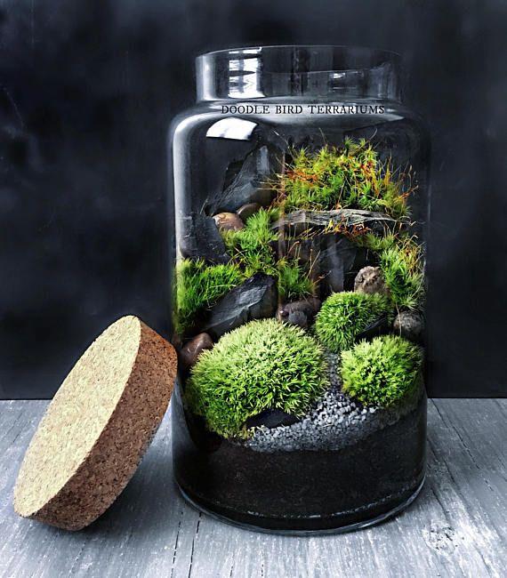 Moss Terrarium In Large Glass Jar Pctr Up, Large Glass Terrarium Jars